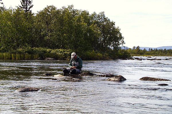 Fly-fishing for big trouts, Swedish Lapland